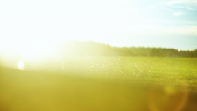 Nature blur summer background Royalty Free Stock Images