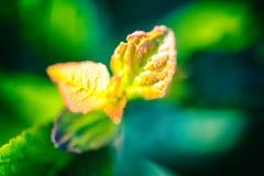 Free Nature Blurred Bokeh Background. Defocus Summer Day Vintage Tone Stock Image - 125315311