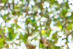 Nature blurry background. Bokeh blurry natural abstract violate background Stock Photos