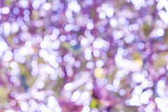 Nature blurry background. Bokeh blurry natural abstract violate background Stock Image