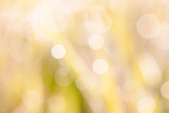 Nature blurry background. Bokeh blurry natural abstract violate background Royalty Free Stock Photography