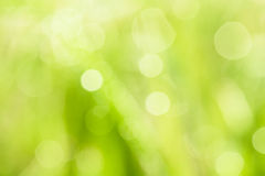 Nature blurry background. Bokeh blurry natural abstract violate background Stock Photo