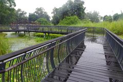Nature Board walk through tropical swamps. A photograph showing the architecture of a stretch of wood and metal elevated boardwalk winding through the swampy stock images