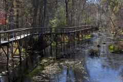 Nature Boardwalk - Blue Springs Park Stock Photography