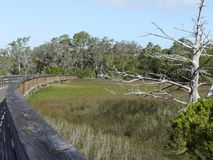 Nature Boardwalk Trail Jekyll Island Georgia Royalty Free Stock Photos