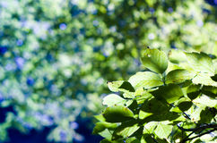 Nature bokeh. In forest abstract Royalty Free Stock Photos