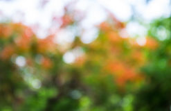 Nature bokeh. Nature abstract bokeh background, orange, white and green colors Stock Photos