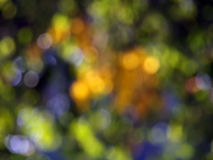 Nature bokeh. Colorful abstract backgound Royalty Free Stock Photo