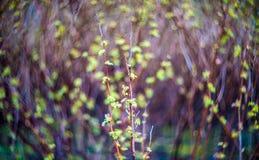 Nature bokeh Stock Photo