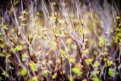Nature bokeh Stock Photos