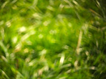 Nature bokeh. Green abstract backgound royalty free stock images