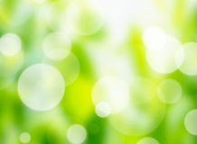 Nature bokeh lights Royalty Free Stock Images