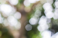 Nature bokeh lights Stock Photography