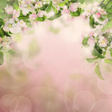 Nature Border with Apple Flowers and Twigs with Green Leaves Stock Photo
