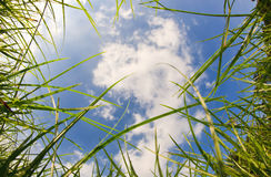 Nature border on blue sky background Royalty Free Stock Images