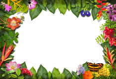 Nature border with flower and green leaf Royalty Free Stock Photos