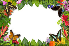Nature border with flower and green leaf Royalty Free Stock Images