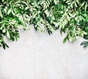 Nature border with green branches and leaves Stock Photo