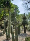 Variety of desert cactus and plants decorating a mexican garden. Nature and botany, variety desert cactus plants decorating mexican garden flora environment dry royalty free stock photo