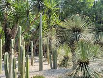 Variety of desert cactus and plants decorating a mexican garden. Nature and botany, variety desert cactus plants decorating mexican garden flora environment dry royalty free stock photography