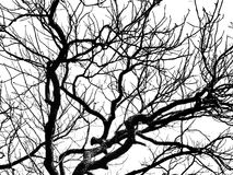 Nature, branches. Natural branches on a white background Stock Photography
