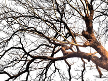 Nature, branches. Tree branches have been set against a mostly white background Royalty Free Stock Image