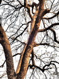 Nature, branches,. Tree branches have been set against a mostly white background Stock Images