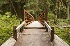 Nature Bridge end near Marymere Falls, Olympic National Park Stock Photo