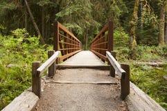 Nature Bridge end near Marymere Falls, Olympic National Park. Horizontal Photo of Nature Bridge over stream near Marymere Falls, Olympic National Park with trees Stock Photo