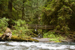 Nature Bridge near Marymere Falls, Olympic National Park. Horizontal wide angle Photo of Nature Bridge near Marymere Falls, Olympic National Park with trees and Royalty Free Stock Image