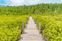 Nature bridge. Wood bridge surround by green plant stock photos