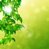 Nature Bright Background Royalty Free Stock Images