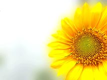 Shining Bright Sun royalty free stock images