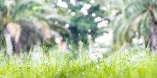 Nature brouillée d'herbe Photos libres de droits