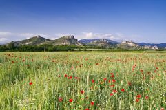 Nature bulgare Photo stock