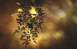 Nature in Bunches Stock Images