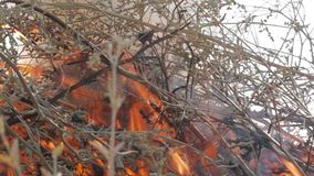 Nature burns, bushes, tree branches,green grass, dry reeds burns with a powerful flame in a fraction of a second, dark