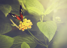 Nature butterfly background Stock Image