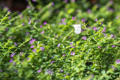 Nature. Butterfly, flower, tree, green, animal, insect Royalty Free Stock Image