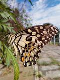 Butterfly in garden. Beautiful life, way of natural, good time, blue sky, lovely in nature, flowers, leaves, plants Stock Image