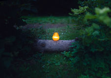 Nature candlelit Stock Images