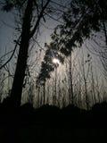 Nature capturée Photos libres de droits