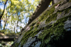 Nature. Captures its territory. Forest Royalty Free Stock Images