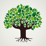 Nature care concept leaves tree Royalty Free Stock Images