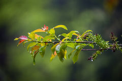 Nature Carpathiens sous la pluie Image stock