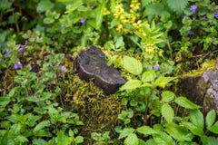Nature Carpathiens sous la pluie Photographie stock libre de droits
