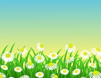 Nature chamomile background Royalty Free Stock Image
