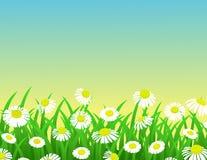 Nature chamomile background. Illustration of beautiful chamomile background Royalty Free Stock Image
