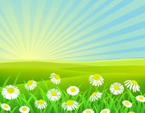 Nature chamomile background Stock Images
