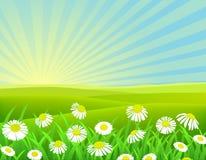 Nature chamomile background. Illustration of beautiful chamomile background Stock Images